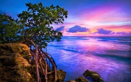 Blue Tide, South Florida - sky, coast, tree, usa, cliff, clouds