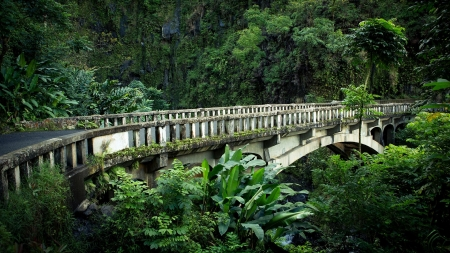 Foot Bridge in Hawaii - jungle, nature, bridge, hawaii