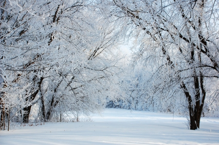 Quiet winter days - tree, snow, peacful, nature, branches, white, winter, cold, photography
