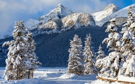 Banff & Rocky Mountains - forests, nature, trees, winter, cold, banff, HD, photography, snow, mountains, rockies, canada