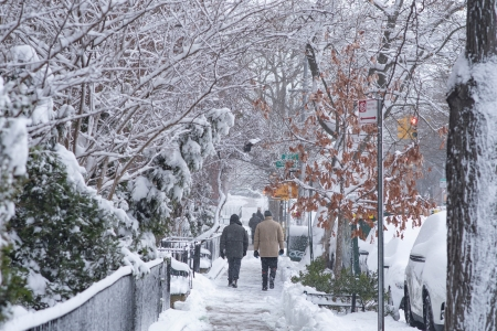 People on a footpath - day, path, nature, trees, winter, cold, HD, photography, snow, urban, people
