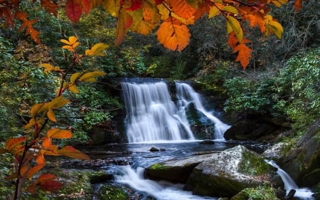 Yellow Creek Falls near Robbinsville, North Carolina - leaves, river, trees, usa, colors