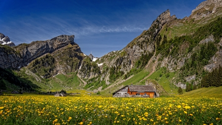 Switzerland - dandelions, beautiful, Switzerland, grassland, meadow, rocks, house, spring, mountain, cliffs, wildflowers