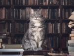 Librarian Kitty