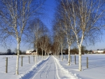 Birch Avenue in Winter