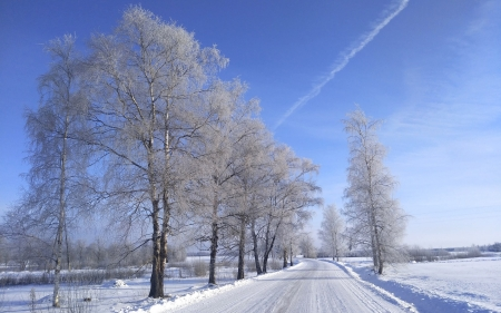 Winter Road in Latvia - snow, road, winter, birches, Latvia, trees