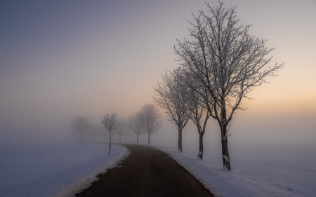 Winter Morning in Germany - snow, sunrise, road, trees, Germany, winter, mist