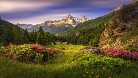 Mountain wildflowers - view, grass, wildflowers, greenery, valley, meadow, hills, house, beautiful, mountain, peaks