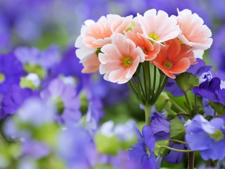 Beauty of Flowers - flowers, nature, pink, blue, beautiful