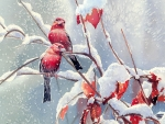 Red Finches