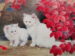 White Cats under red Leaves