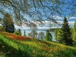 Spring Alley, Lake Bodensee, Germany