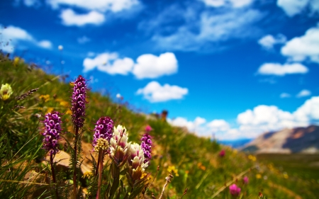Purple Gayfeather flower - blossoms, sky, landscape, mountains