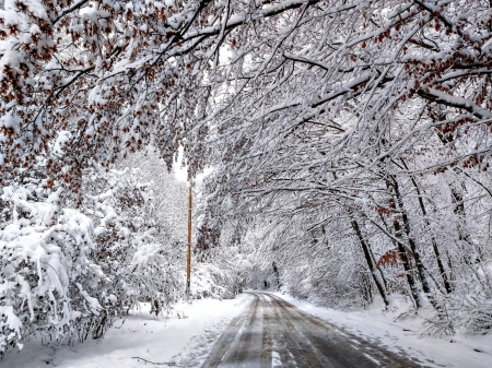 beautiful winter in the park - Trees, Snow, Winter, Road