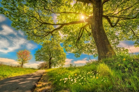 Spring sun - spring, freshness, glow, sun, grass, beautiful, tree, rays, wildflowers, path, walk, branches