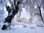 beautiful tree in snow