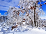 beautiful winter scene 2