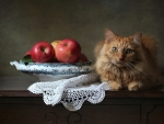 Cat and Apples