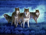 Wolves in the Blue