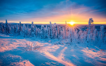 Ice covered forest in nowhere Northern Alaska - trees, snow, landscape, usa, colors, sunset