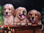 Little Puppies