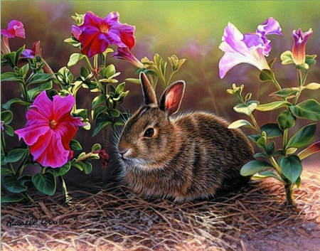 Rabbit in the Flowers - flowers, spring, rabbit, animal