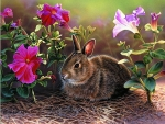 Rabbit in the Flowers