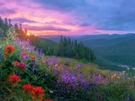 Wild flowers and a wild sunset on Mount Hood, Oregon