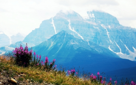 Wildflowers perched up high in Banff National Park, Alberta - blossoms, sky, mountains, canada, misty