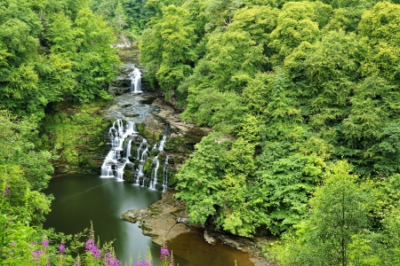 Corra Linn waterfall, Scotland - pond, forest, green, waterfall, beautiful, creek, trees, Scorland, wildflowers
