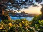 Sunset along trail in Ucluelet, Vancouver Island
