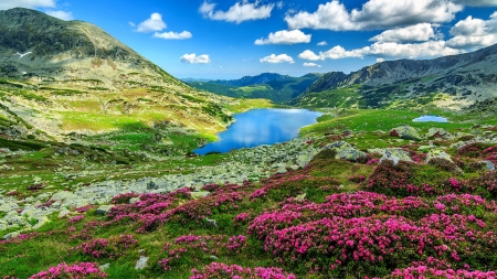Retezat national park - mountain, view, national park, wildflowers, beautiful, sky, Romania, lake