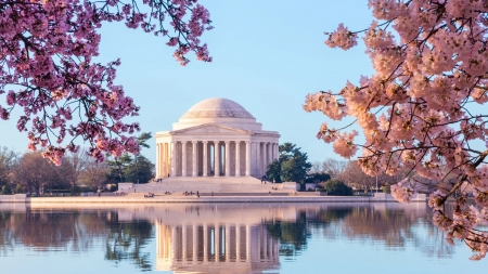 Springtime at Jefferson Memorial - cherry, Washington DC, water, usa, blossoms, sky, reflections