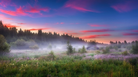 Spring Morning - Field, Fog, Spring, Sunrise, Sunset, Sky, Morning, Clouds, Flowers, House