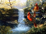 Cardinals on Waterfall