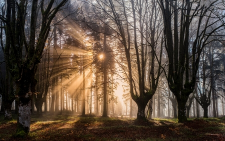 Sunrise in Forest - sunbeams, forest, sunrise, trees