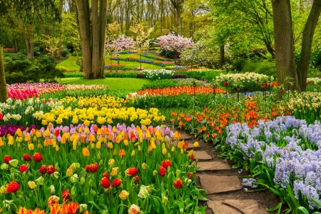 Garden in Keukenhof - colorful, grass, greenery, Keukenhof, beautiful, spring, park, trees, Netherland, freshness, Holland, garden, flowers, tulips, walk, alley