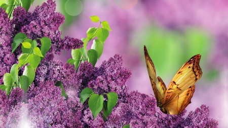 Spring Flowers - blossoms, leaves, butterfly, lilacs