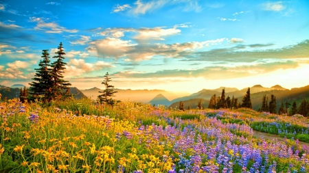 Spring Mountain Wilderness, France - trees, wildflowers, flowers, blossoms, sunset, clouds, sky