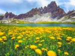 Wildflowers in the Dolomites, Italy