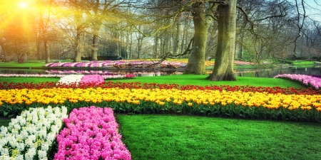Spring palette - colorful, grass, sunny, Keukenhof, beautiful, park, spring, trees, Netherland, freshness, palette, rays, Holland, garden, tulips, walk