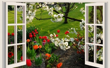 A beautiful day in spring - blossoms, garden, lawn, tulips, window