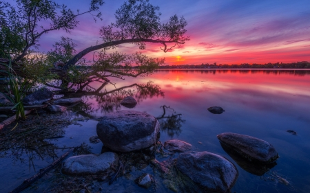 Wilcox Lake, Ontario - willow, wood, stones, dusk, sunset, reflections, canada