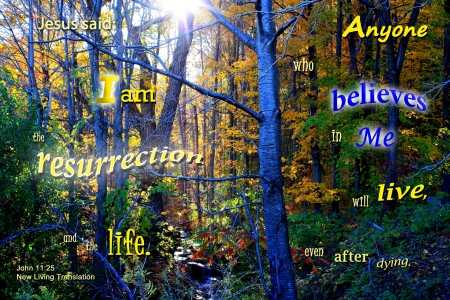 Resurrection and Life - forest, stream, sun, water, plants, woods, Bible, creek
