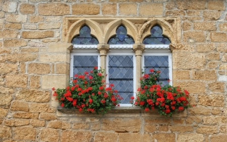 Window with Pelargoniums