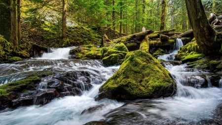 Panther Creek Falls, Washington - stones, river, usa, rocks, forest, trees