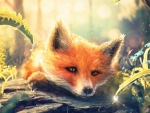 Fox in the spring morning dew