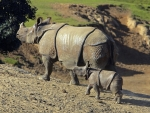 Rhinoceros and her Baby