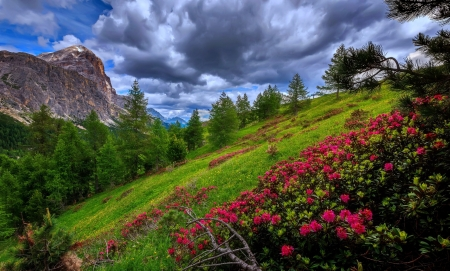 Mountain wildflowers - beautiful, spring, freshness, rocks, grass, clouds, sky, mountain, wildflowers, rhododendron, slope, dolomites