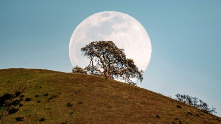 Moonrise behind a lone tree in the San Francisco Bay area - hill, sky, usa, california